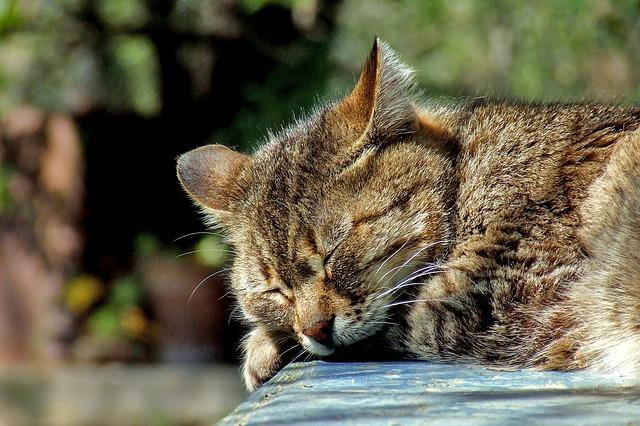 schlank schlafen